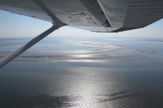 Natuurcompensatie Tweede Maasvlakte - zwarte zee-eenden