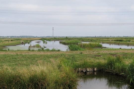 Biodiversiteit in veengraslanden Krimpenerwaard