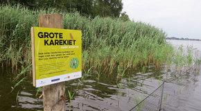 Wetland ecology and marsh birds